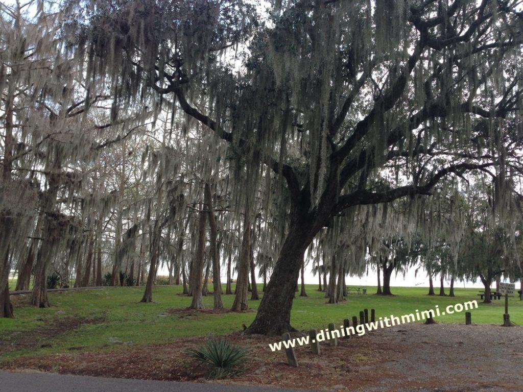 St Mary's Parish Trees