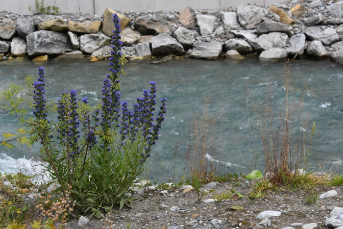 Flora by water for Dazed by Engelberg in July www.diningwithmimi.com
