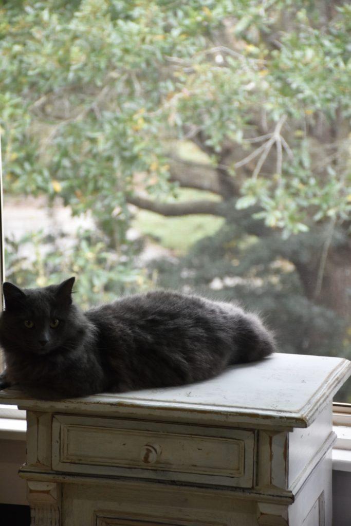 Writing Partner Mennu My new Mascot and New Years Menu www.diningwithmimi.com
